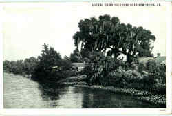A Scene On Bayou Chene