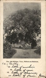 The Old Willow Tree