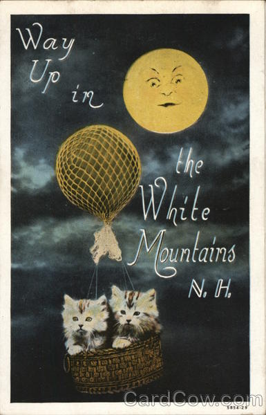 Way Up In the White Mountains N.H. Cats