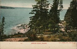 Spruce Point