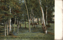 Grove at the Rangely Lake House