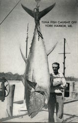 Tuna Fish Caught off York Harbor, ME