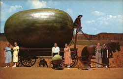 Actual Photograph of a California Grown Watermelon Taken After it was Loaded on the wagon