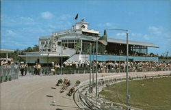 Fort Myers Kennel Club - Greyhound Racing Postcard