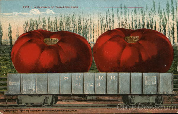 A Carload of Tomatoes From ___________ Exaggeration