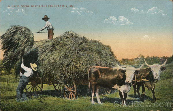 A Farm Scene Near Old Orchard Old Orchard Beach Maine