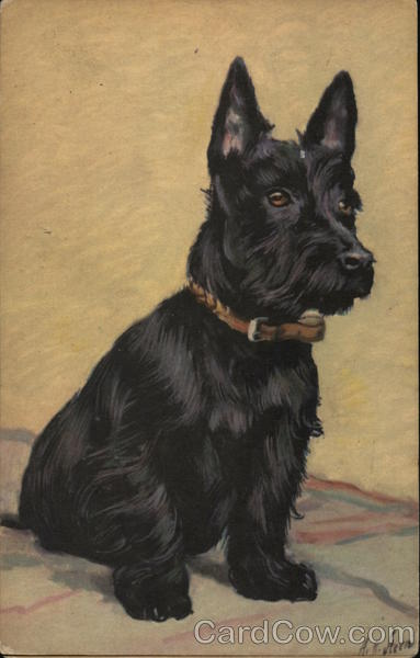 Scottish Terrier Sitting on a Blanket A. H. Stern Dogs