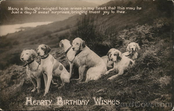 Hearty Birthday Wishes Dogs