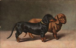 Two Miniature Dachshunds