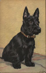Scottish Terrier Sitting on a Blanket