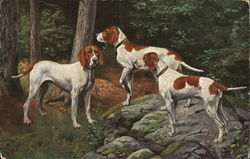 Hunting Dogs in the Woods