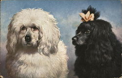 Black and White Fluffy Dogs, One with Bow