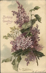 Purple & White Flowers Postcard