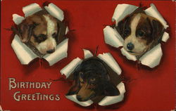 Birthday Greetings - Three Pups Poking Heads Through Card