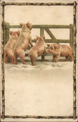 Four Pigs By A Fence
