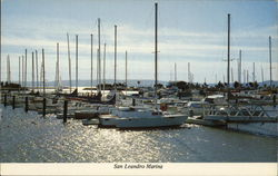 Peaceful Setting at San Leandro Marina Postcard