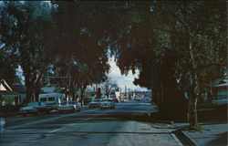 View of Street with Large Trees
