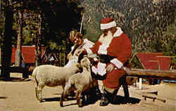 Santa and Little Bo-Peep Petting Friendly Animals Postcard