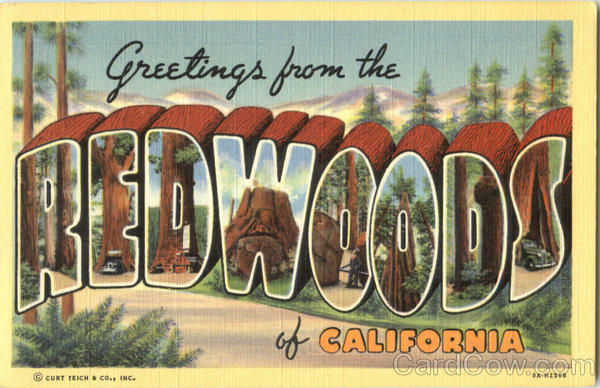 Greetings From Redwoods Of California Large Letter