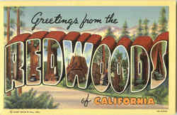Greetings From Redwoods Of California