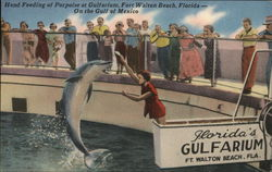 Hand Feeding of Porpoise at Gulfarium