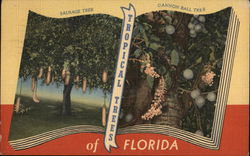 Tropical Trees of Florida