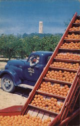Loading Fruit, Bok Singing Tower in Background