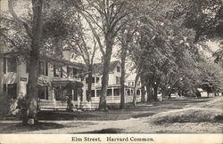 Elm Street, Harvard Common Postcard