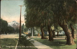 Scene From the City Park