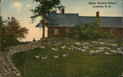 Sheep at Glessner Estate