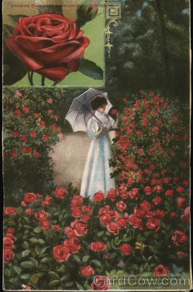 Woman by Rose Bushes with Inset of American Beauty Red Rose