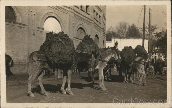 Donkey's Carrying a Load Spain