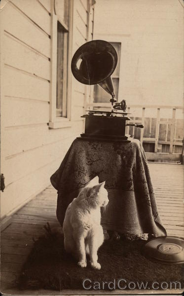 Teddy the Cat with Gramophone & Records Cats Phonographs