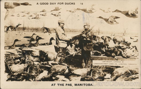 A Good Day For Ducks, At the Pas, Manitoba Hunting
