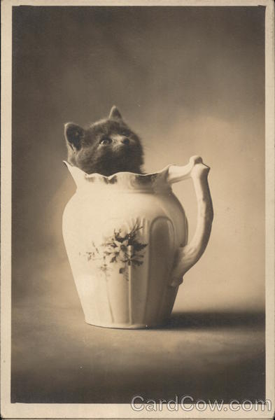 Kitten in Pitcher Cats