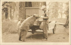 Bear Eating from Man's Hand - Yosemite?