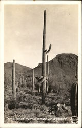 """Saguaros"" in the Arizona Desert"