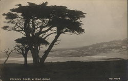 Cypress Trees, 17 Mile Drive