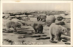 Polar Bears on Arctic Ice Floe