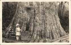 Big Tree, Seminole County Park, Florida Postcard