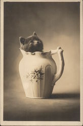 Kitten in Pitcher