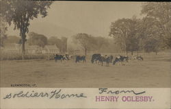 Dairy Cows Grazing - Soldier's Home