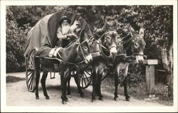 Mules Pulling Buggy