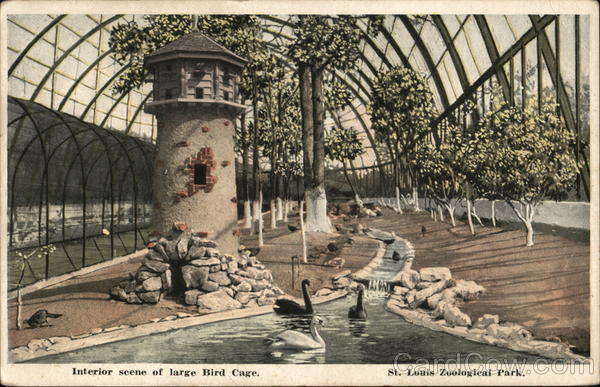 Interior Scene of Large Bird Cage, St. Louis Zoological Park Michigan
