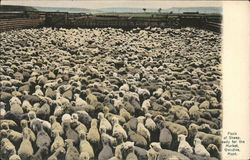 Flock of Sheep Ready for the Market