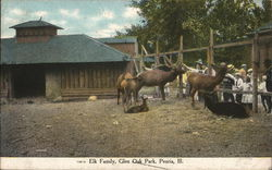 Elk Family, Glen Oak Park