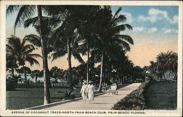 Avenue of Cocoanut Trees - North from Beach Club Palm Beach Florida
