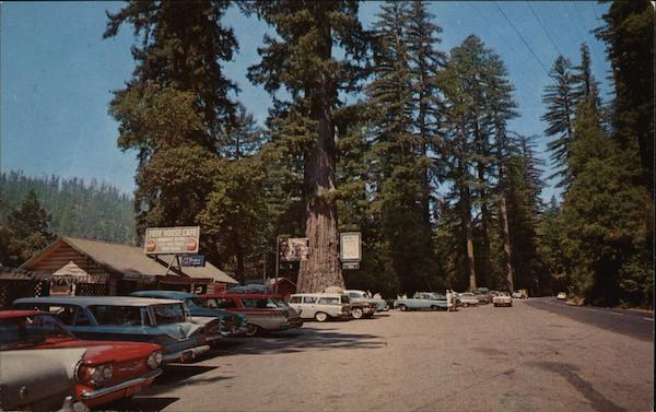 World Famous Tree House Piercy Ca Postcard