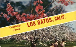 Greetings From Los Gatos, Calif.
