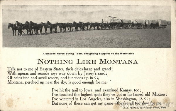 A Sixteen Horse String Team, Freighting Supplies To The Mountains Montana